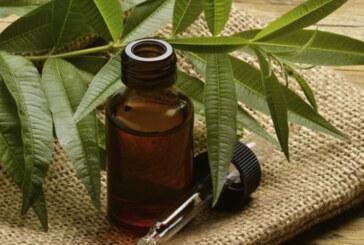 Tea tree oil: un rimedio naturale dai molteplici usi