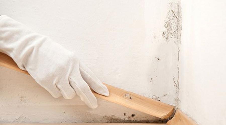 Le muffe sui muri sono dannose per la salute delle persone