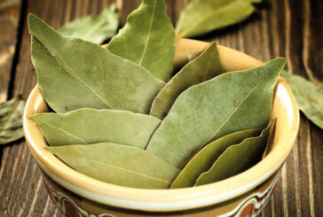 L'alloro una pianta miracolosa fin dall'antichità
