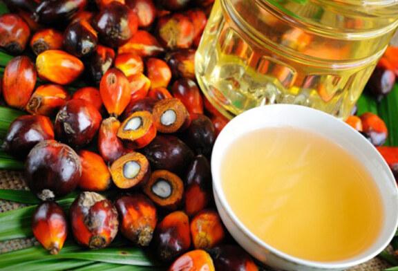 Fa male l'olio di palma?